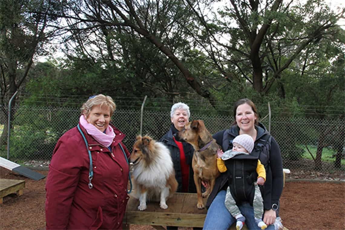 dog agility area in devonport