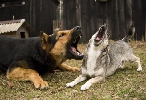 nuisance dog