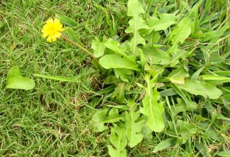 weed management devonport
