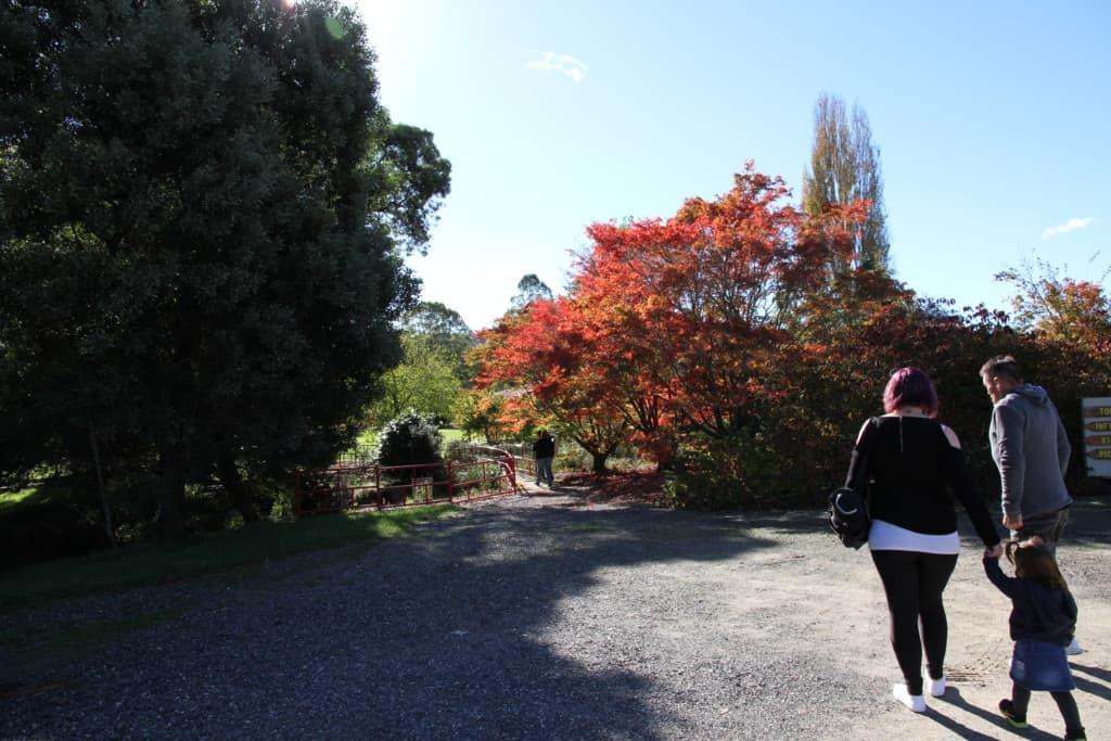 The Tasmanian Arboretum 7