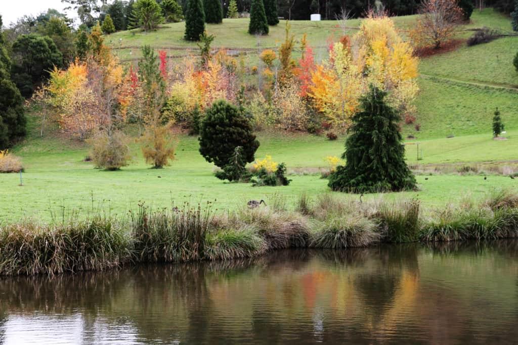 The Tasmanian Arboretum 6