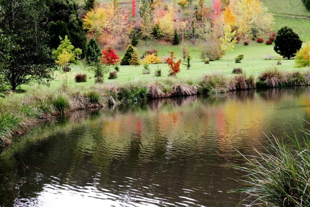 The Tasmanian Arboretum 5