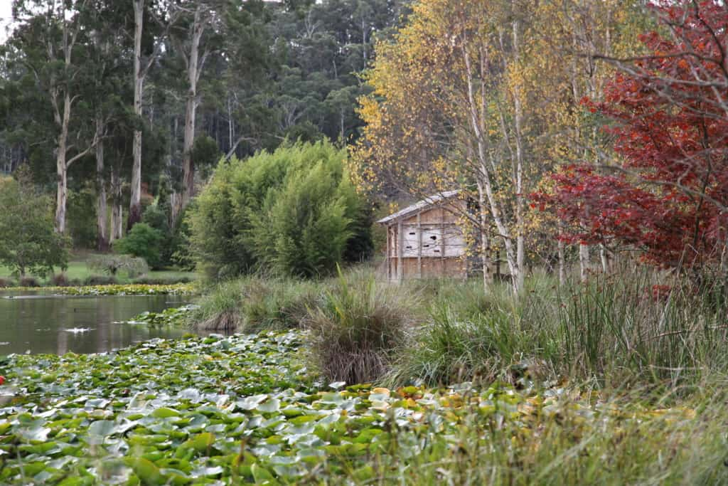 The Tasmanian Arboretum 4