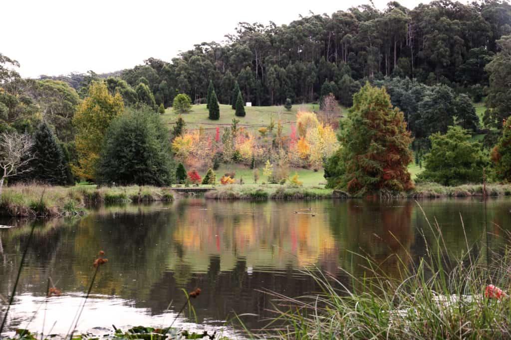 The Tasmanian Arboretum 3