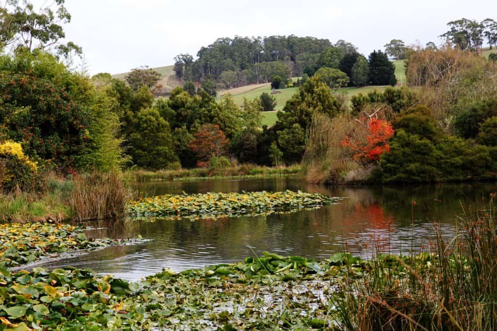 The Tasmanian Arboretum 2