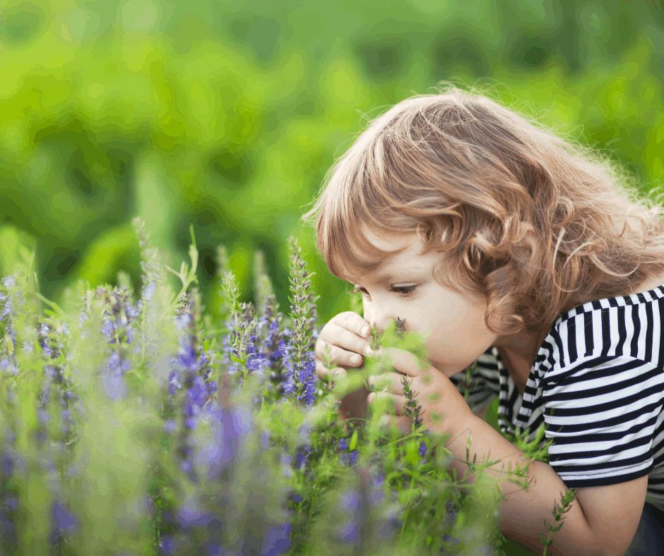 Toddler Pop-Ups – 2020 Term 1