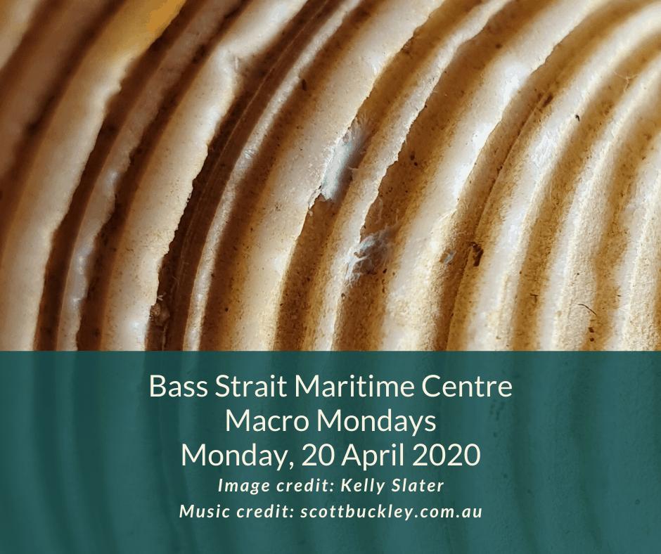 BSMC Macro Mondays 20 April 2020